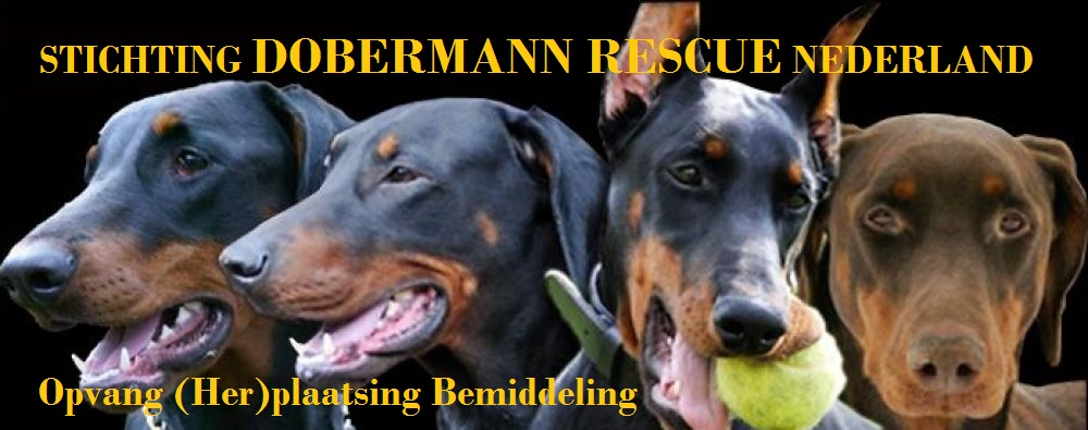 Stichting Dobermann Rescue Nederland